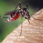 Jasa Fogging Nyamuk di Yogyakarta | PT Fumida